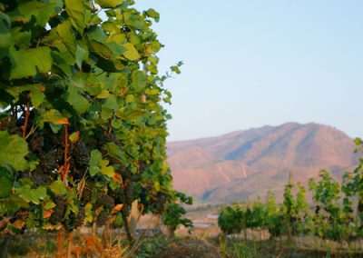 red-mountain-estate-myanmar-vineyard-image-12