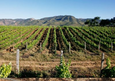 red-mountain-estate-myanmar-vineyard-image-8